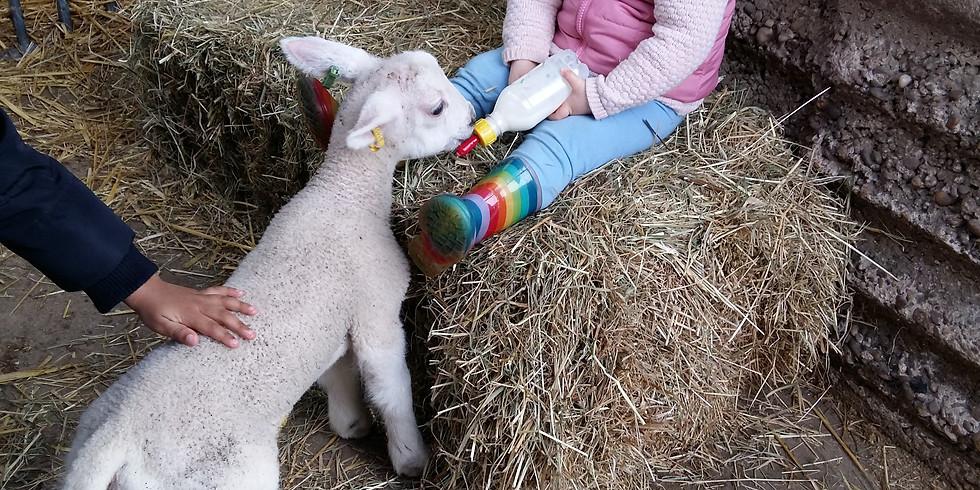 Lamb Feeding 2018 3pm