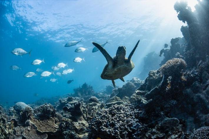 Snokeling the reef.JPG