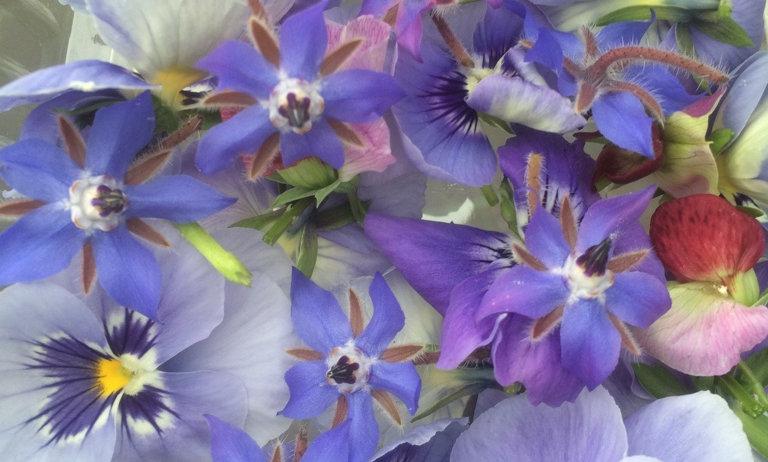 Flores Comestíveis Mix 10 unid