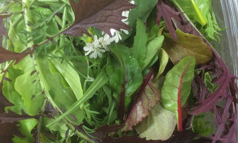 Salada Mix Folhas - 250 gr