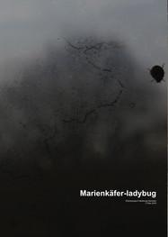 Marienkäfer-ladybug