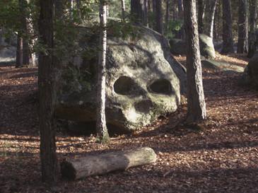 La forêt de Fontainebleau - Paris