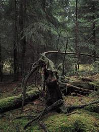 Harlösa-Sweden