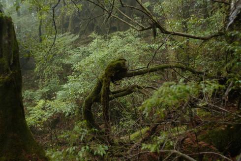 FILM : Mononoke