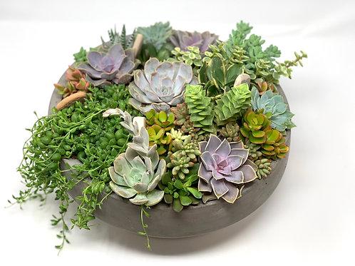 Lush Modern Concrete Bowl Succulent Centerpiece