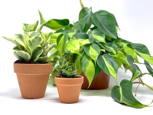 Jungle Room Plant Set