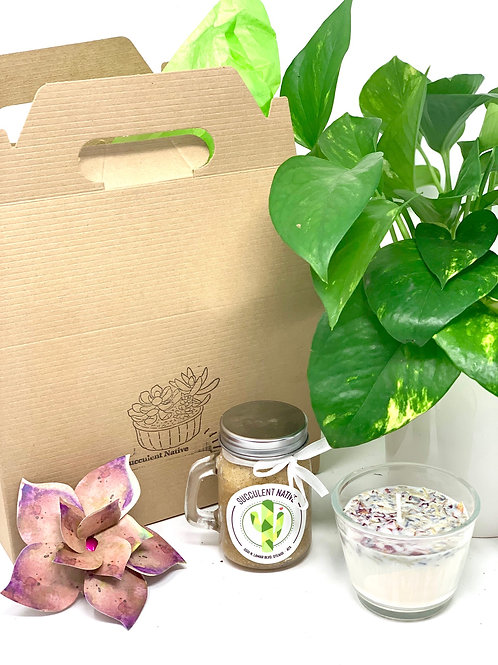 Houseplant Lovers Gift Box