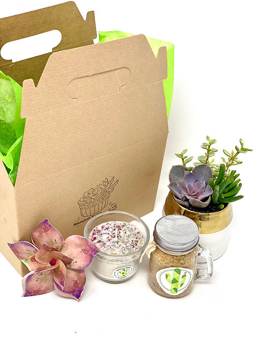 Succy Love Gift Box