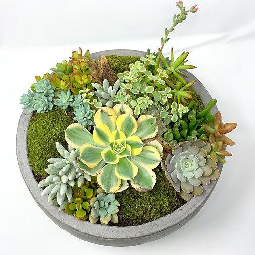 BModern Bowl Succulent Centerpiece