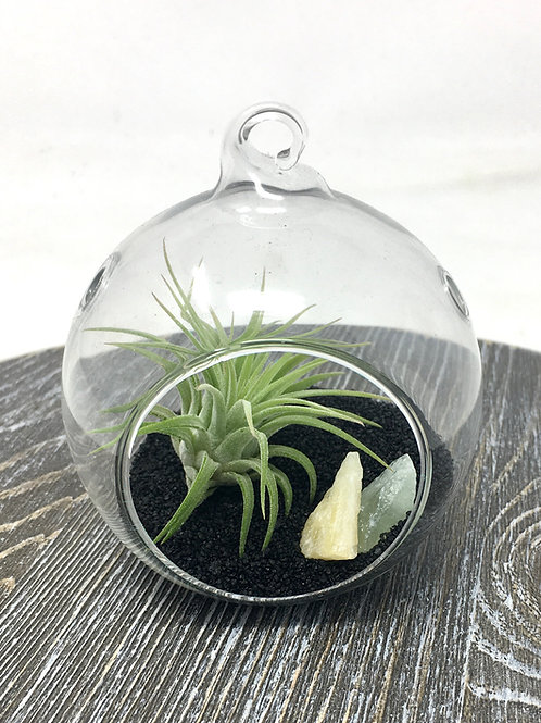 Clear Glass Planter with Airplant