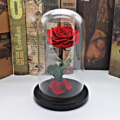 King Of Roses - Edition La belle et La bête