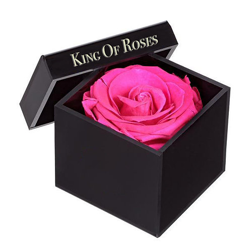 "King Of Roses - Edition "" Piccolo """