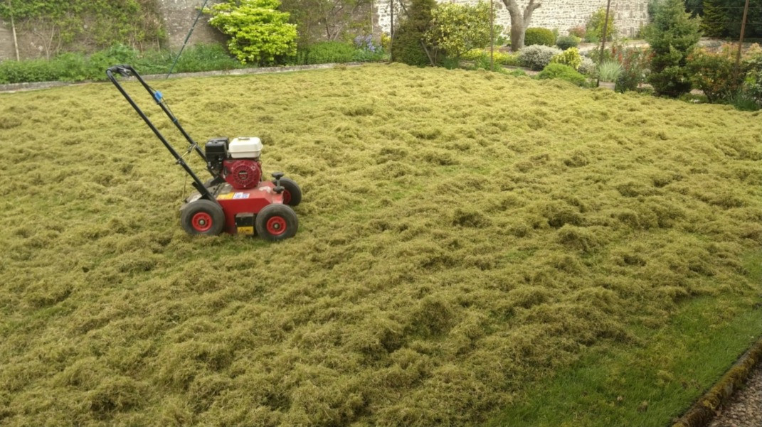 removal of heavy thatch layer for health