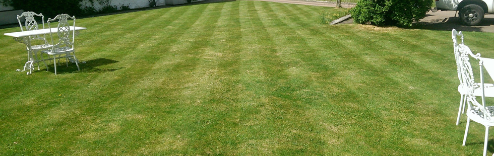How to grow a beautiful lawn