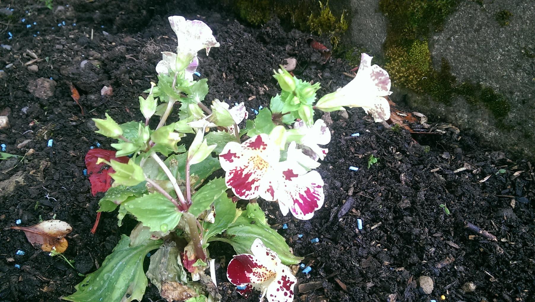 Spring bedding plants