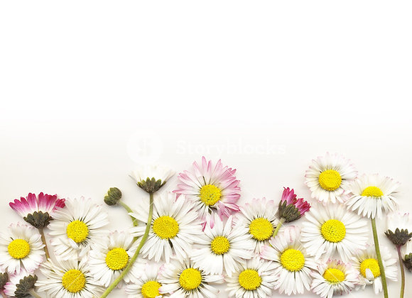 Designers Choice- Small Vase Arrangement