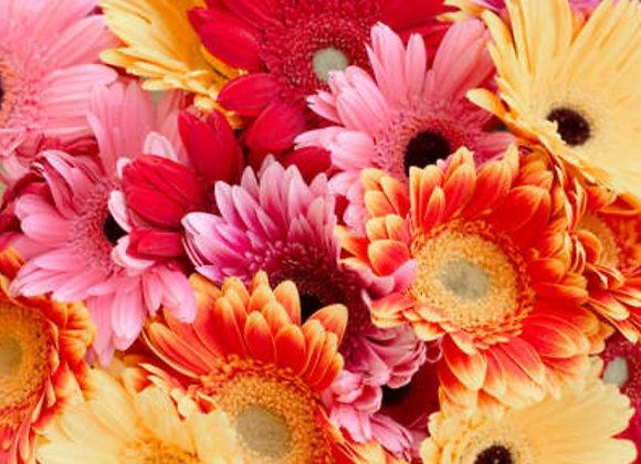 Assorted Gerber Daisy Bouquet