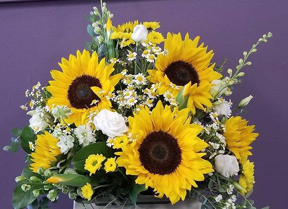 Sensational Sunflowers