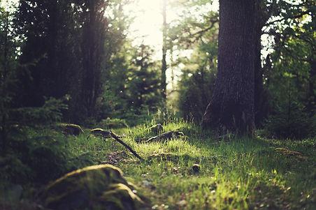la photo montre une forêt d'île de France où nous porposons des stages d'immersion en forêt