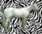 naked-zebra-1-bruce-iorio.jpg