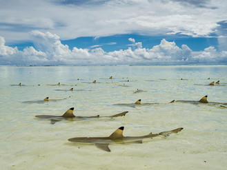 Amazing photography of the Aldabra Atoll!