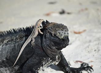 Incredible Galapagos