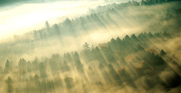 森の上に朝の霧