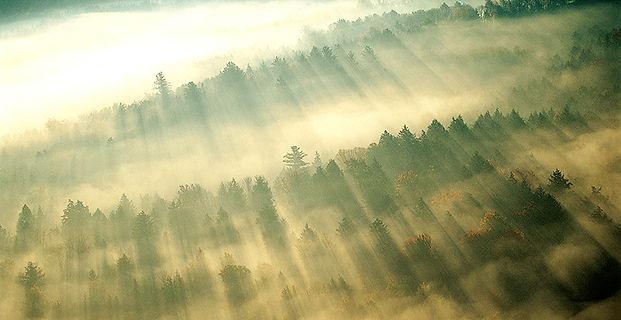 Niebla de la mañana sobre el bosque