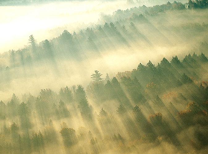 Waldjugend Dasburg