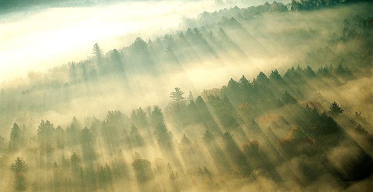 숲을 통해 아침 안개