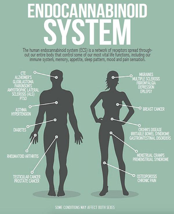 endocannabinoid-system.jpg