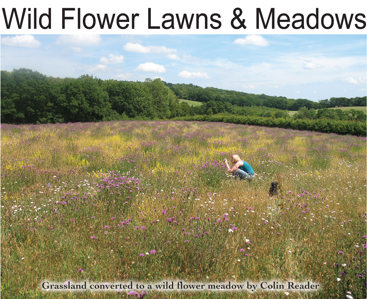 Wild Flower Lawns and Meadows logo