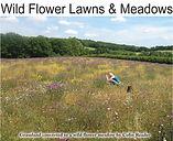 Wild Flower Lawns and Meadows logo.jpg