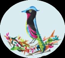 Bird & Wild
