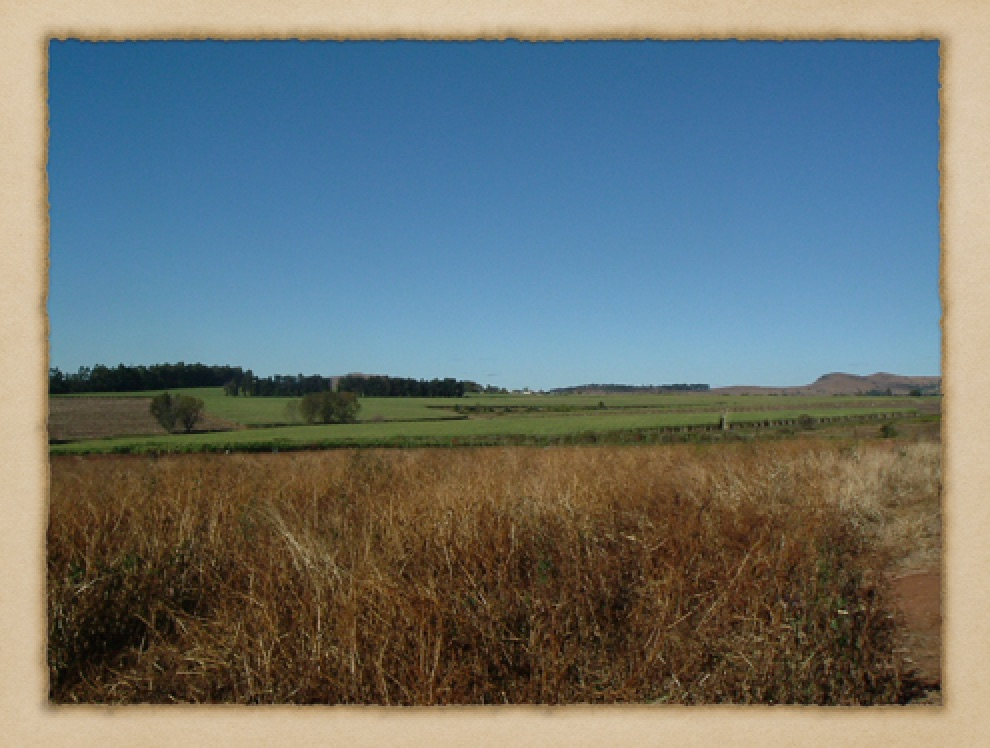 Fields Near Mbabane