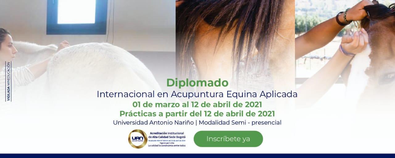 Diplomado Acupuntura Veterinaria Equinos