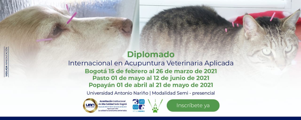 Diplomado Acup. Vet Pequeños (Bogotá)
