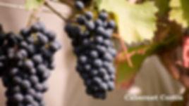 Cabernet Cortis druif2.jpg