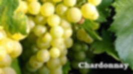 Chardonnay druif2.jpg