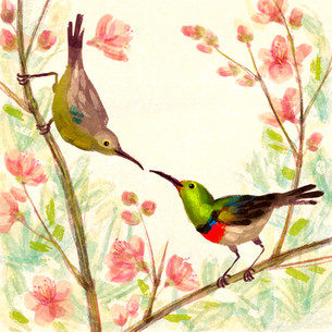 Red collared sunbirds