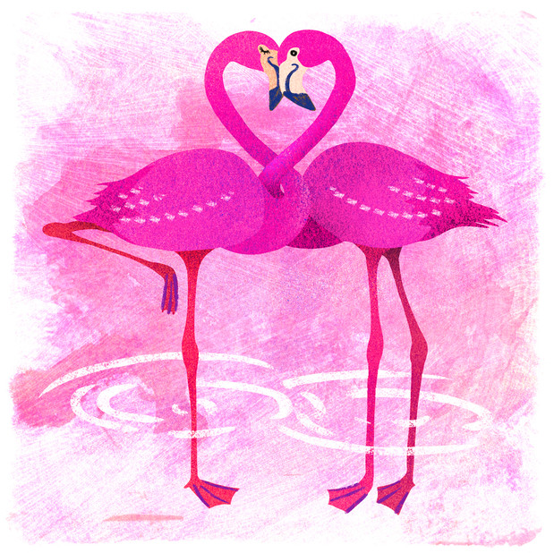 Flamingoes in love