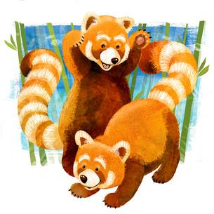 Red panda's pounce