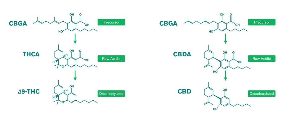 Cannabinoids 101