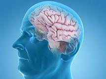 brain-elderly-male-blue-large-bigstock-1