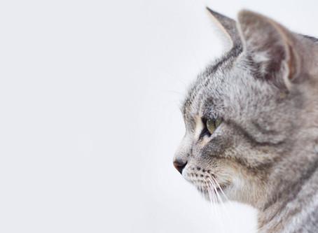 How animals help us heal