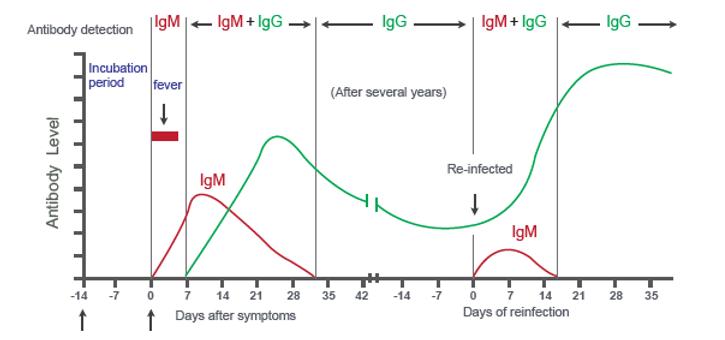 IgM&IgG Antibody