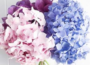 The Four Seasons & How to Appreciate Them