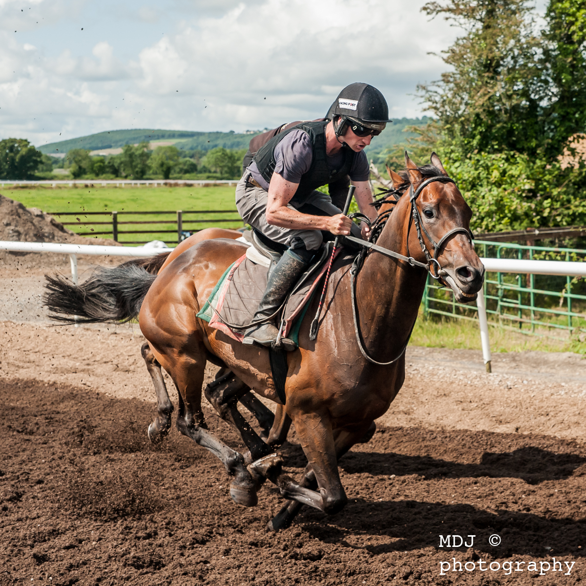 Willie Mullins trainingsyard