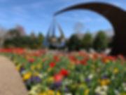 Rain of Faith - Tulips.jpg