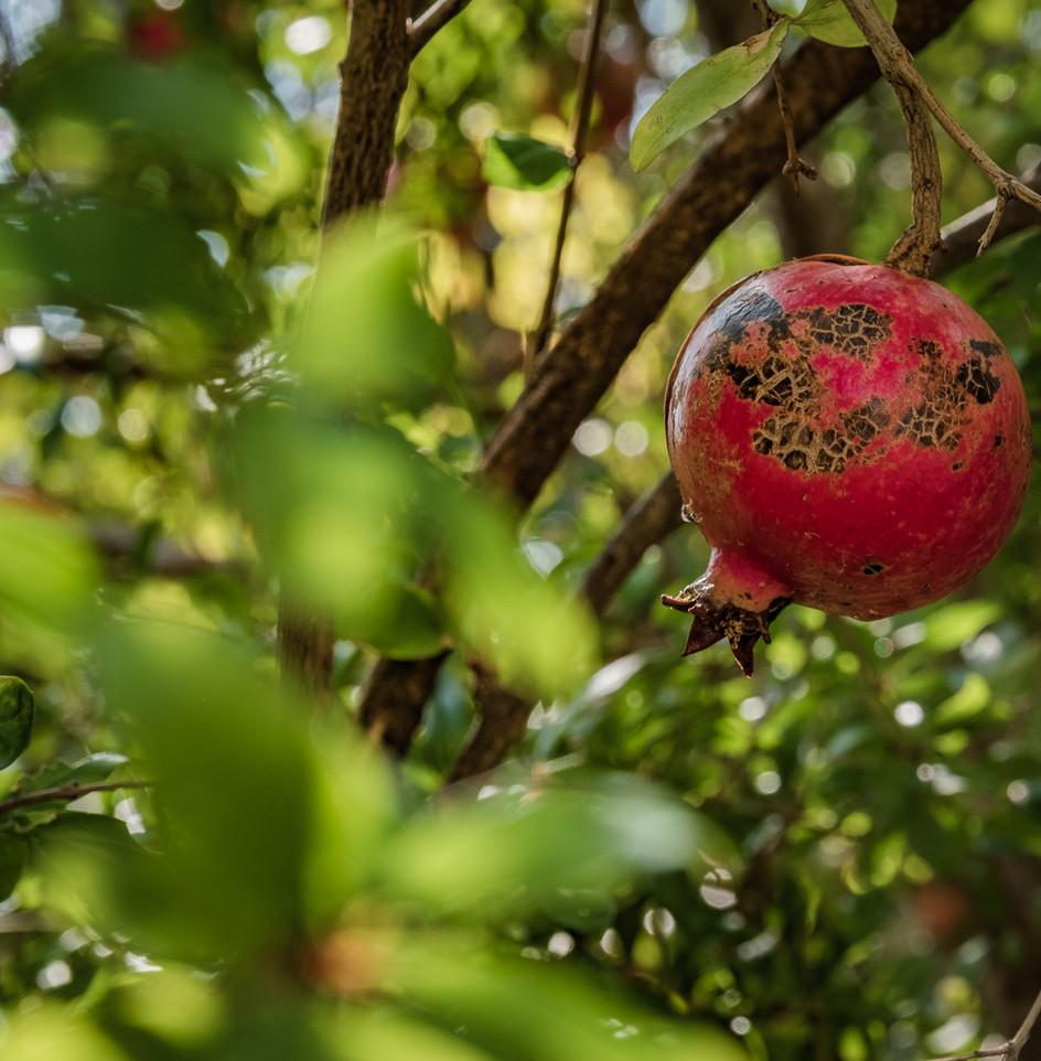 Fruit of Love